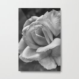 Flower Photography Black and White Rose Metal Print