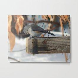 Nuthatch feeder Metal Print