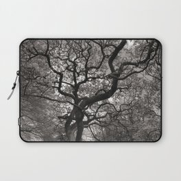 Magnolia Trees in Blossom 03 Laptop Sleeve