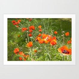 A Garden of Poppies Art Print