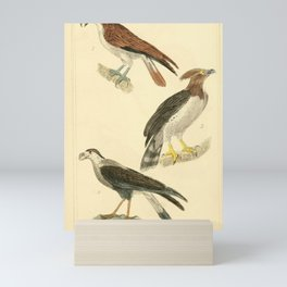 Osprey, American Harpy, Common Caracara15 Mini Art Print