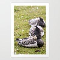 Triple Duck! Art Print