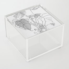 Monstera. Living Acrylic Box