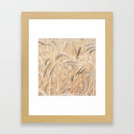 vintage summer ~ cornfield Framed Art Print