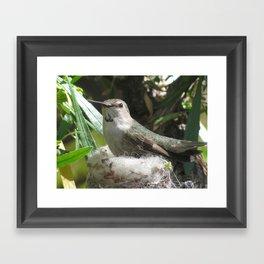 Hummingbird in the nest Framed Art Print