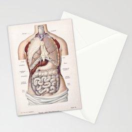 Anatomy Stationery Cards