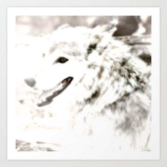 Wolf Photo Art Print