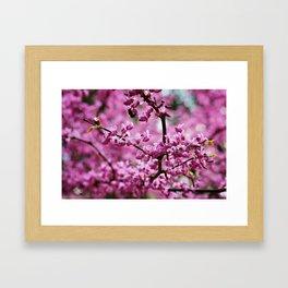 SC Clemson Botanical Gardens Framed Art Print