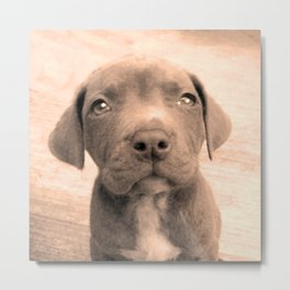 Pitbull puppy in Sepia Metal Print