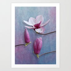 Pink Chinese Magnolia Flower with Two Buds Art Print