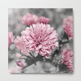 Blushing Gray Metal Print