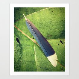 Bluejay feather and burdock leaf Art Print