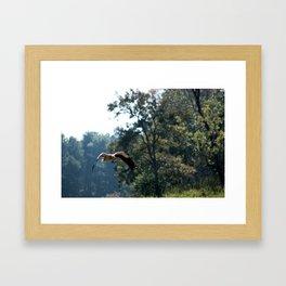 Eagle flight Framed Art Print
