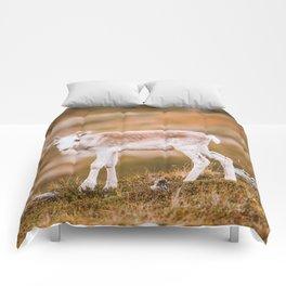 Reindeer Calf Comforters