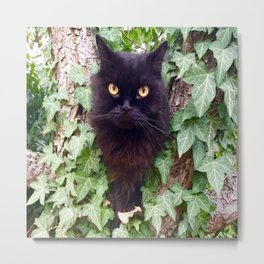 a cat owl, King Pomponio Mela Metal Print
