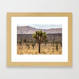 Joshua Tree Sea Framed Art Print