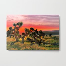 Sunset at Joshua Tree National Park, California, USA Metal Print