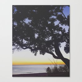 Tree in Sunset Silhouette Overlooking Pacific Ocean on the Santa Monica Bluffs Canvas Print