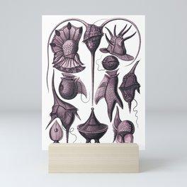 Ernst Haeckel Peridinea Fucshia Mini Art Print
