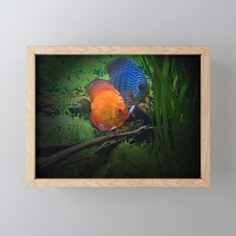 Colorful Fishes Framed Mini Art Print