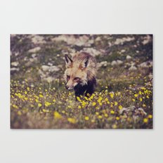 Summer Fox Canvas Print
