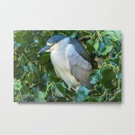 Sleeping Heron Metal Print