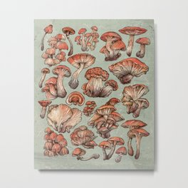A Series of Mushrooms Metal Print