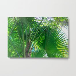 Sunny Tropical Palms 1 Metal Print