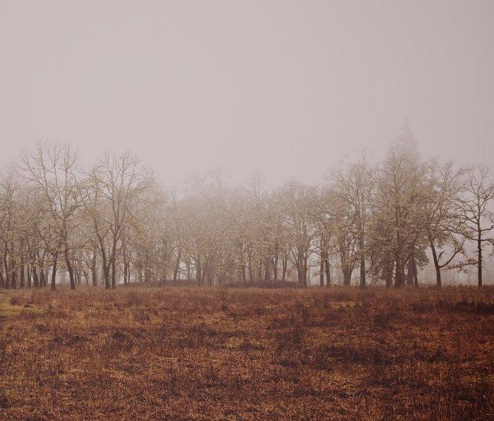 Foggy Trail to the Trees Metal Travel Mug
