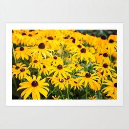 Spot of Sunshine Art Print