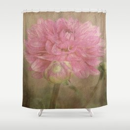 Soft Graceful Pink Painted Dahlia Shower Curtain