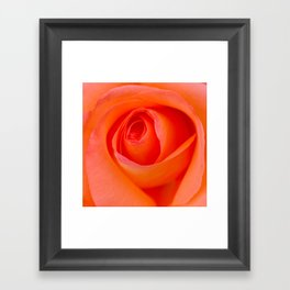 Beautiful Orange Rose Blossom Framed Art Print
