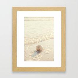 Seashell by the Seashore I Framed Art Print