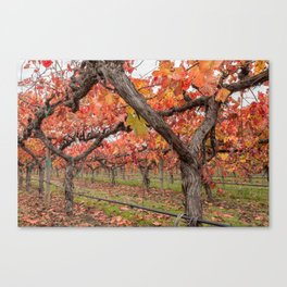 Red Vines Canvas Print