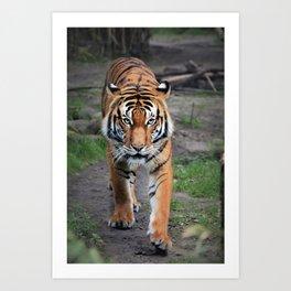 The Bengal Tiger Art Print