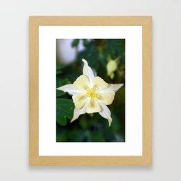 Yellow Columbine Flower Macro Framed Art Print