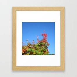 Fallbeauty/ Looking up Framed Art Print