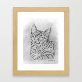 Tabby Cat Framed Art Print