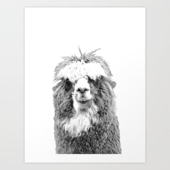 Black and White Alpaca Art Print