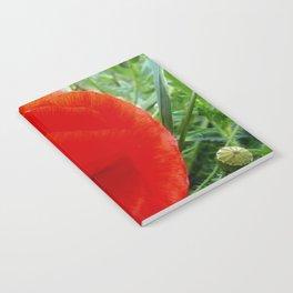 red flower - poppy Notebook