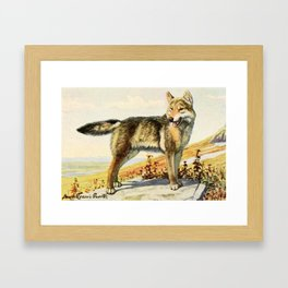 Fuertes, Louis Agassiz (1874-1927) - Burgess Animal Book for Children 1920 (Wolf) Framed Art Print