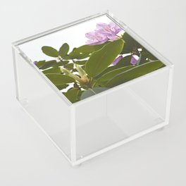 Pink Azalea Flowers with Spring Green Leaves Acrylic Box