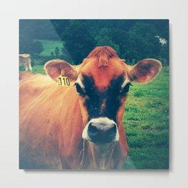 Cow 110 Metal Print