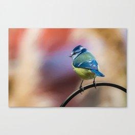 Blue Tit UK Canvas Print