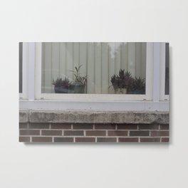 Plants in window Metal Print