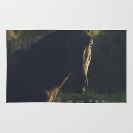 Wild stallion photo, black horse and italian sunset, original print for animal lovers, landscape Rug