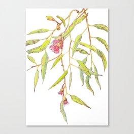 Flowering eucalyptus tree branch Canvas Print