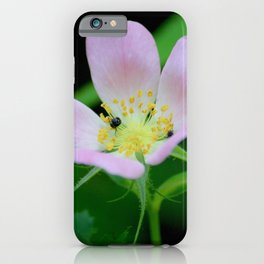 Pretty in Pink at Hawn State Park (Missouri) iPhone Case