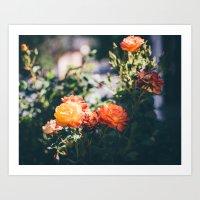Glowing Morning Roses Art Print