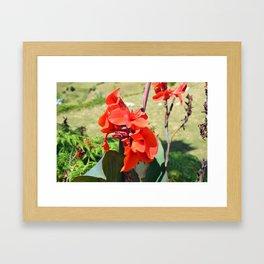 Canna Lily Framed Art Print